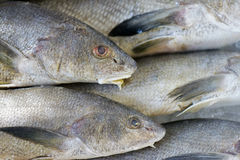 Fish exposed in fish market Stock Image