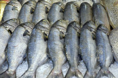 Fish exposed in fish market Royalty Free Stock Photography