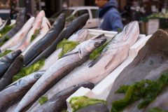 Fish exposed in market. Cods, mediterranean fish at market in Naples, Italy Royalty Free Stock Photos