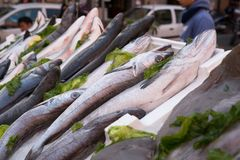 Fish exposed in market. Cods, mediterranean fish at market in Naples, Italy Stock Photography