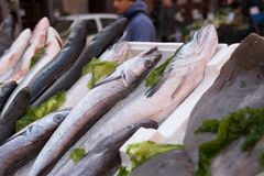 Fish exposed in market. Cods, mediterranean fish at market in Naples, Italy Royalty Free Stock Image