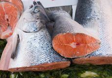 Fish exposed in market Stock Images