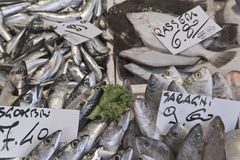 Fish exposed to the market with price tags Royalty Free Stock Photo