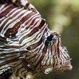 Fish eye Royalty Free Stock Images