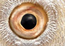 Fish eye stock photos