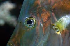 Fish eye Stock Photo