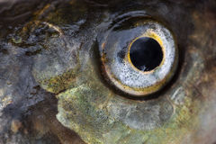 Fish eye close up. Abstract background Stock Images