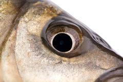 Fish eye Royalty Free Stock Image