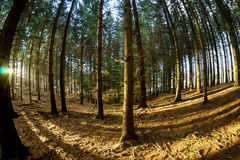 Fish-eye forest Royalty Free Stock Photography