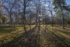 Fisheye 180 view of a space in the Retiro Park in Madrid city. Fish eye view 180 of a space with trees of the Retiro Park in Madrid city, Spain Royalty Free Stock Photography