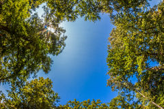 Fish-eye View of Trees in a Forest Royalty Free Stock Photos