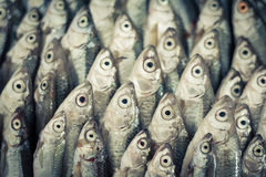 The fish eyes Royalty Free Stock Photography