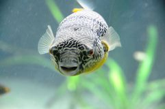 Fish Face Royalty Free Stock Photos