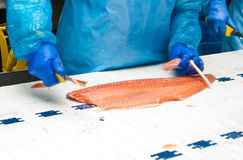 Fish factory salmon production royalty free stock image