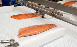 Fish factory salmon production royalty free stock photo