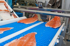 Fish factory salmon production stock photos