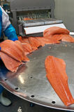 Fish factory salmon production stock photography
