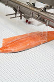 Fish factory salmon production royalty free stock images