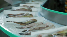 Fish factory Seafood Production stock video footage
