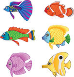Fish family. Various types of fish with beautiful colors Royalty Free Stock Images