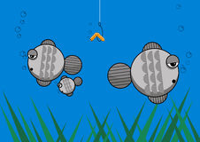 Fish family illustration. Fish family splitting up like a divorce and ignoring the lure with the lovely worm on it Stock Images