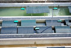 Fish farm. For breeding fish in special trout and then repopulate the rivers Trent stock photography