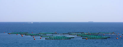 Fish Farm Royalty Free Stock Photos