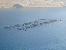 Fish Farm. A sea fish farm stock photo
