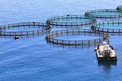 Fish farm Royalty Free Stock Images