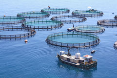 Fish farm Royalty Free Stock Photo
