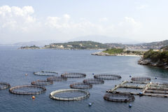 Fish farm Stock Images