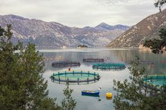 Fish farm in Adriatic Sea on cloudy autumn day. Montenegro, Bay of Kotor. Fish farm in Adriatic Sea on cloudy autumn day. Montenegro, view of Bay of Kotor and stock photos