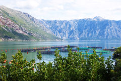 Fish farm in the Adriatic Sea Stock Photos
