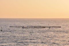 Fish Farm in the Atlantic Ocean Royalty Free Stock Photos