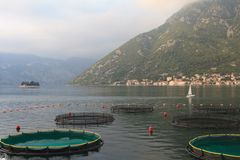 Fish farm in the Bay of Kotor. Stock Photo