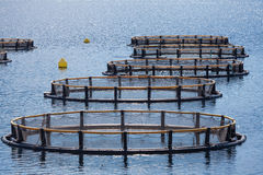 Fish farm in the Bay of Kotor Royalty Free Stock Images