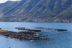 Fish farm in the Bay of Kotor Royalty Free Stock Photos