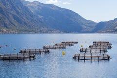 Fish farm in the Bay of Kotor Stock Image