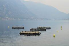 Fish farm in the bay of Kotor, Montenegro Stock Image