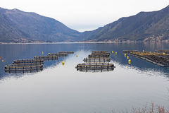 Fish farm in the Bay of Montenegro Royalty Free Stock Photography