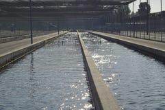 Fish farm. Royalty Free Stock Image