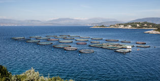 Fish Farm with floating cages Royalty Free Stock Photo