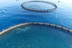 Free Fish Farm In The Sea, Fenced With Round Net Royalty Free Stock Photo - 155438135