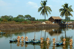 Fish farm in india Royalty Free Stock Photography