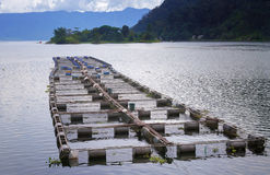 Fish farm on the Lake Maninjau Stock Photography