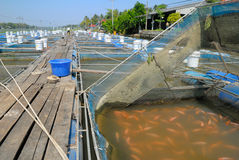 Fish farm located on the river Stock Photos