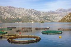 Fish farm in Mediterranean. Montenegro, Adriatic Sea, view of Bay of Kotor stock photo