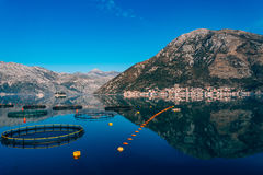 Fish farm in Montenegro. The farm for breeding and fish farming royalty free stock photo