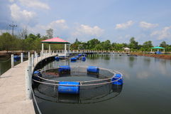 Fish farm net Stock Images