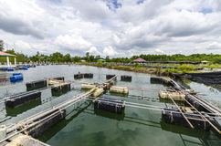 Fish farm in the pond. Royalty Free Stock Photography